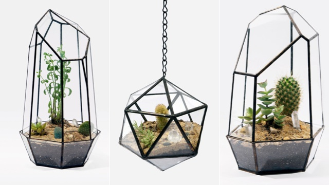 Click here to read Geometric Terrariums Are a Gorgeous Excuse to Buy a Cactus