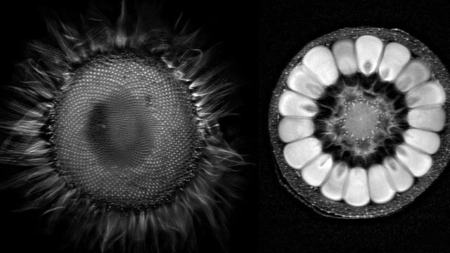 "What do fruits and vegetables look like inside an MRI? Short answer: ""Whoa."""