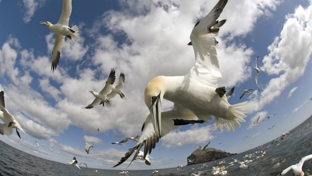 Click here to read This Unbelievable Footage Literally Shows a Bird's Eye View of the Entire World