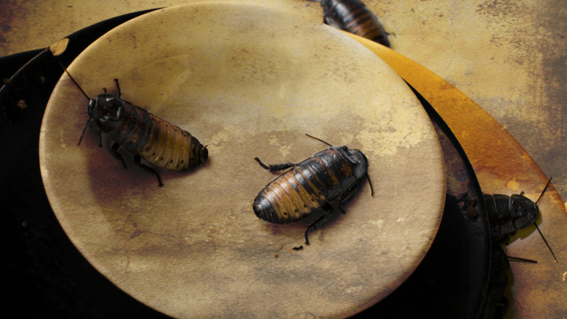 Man wins live cockroach-eating contest, promptly dies