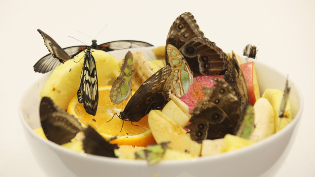9,000 Butterflies Were Killed in Damien Hirst's Latest Exhibit; Unfortunately, Many Butterflies Continue to Roam Free