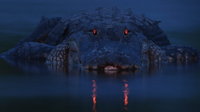 This Devilish Alligator Has Not Been Photoshopped