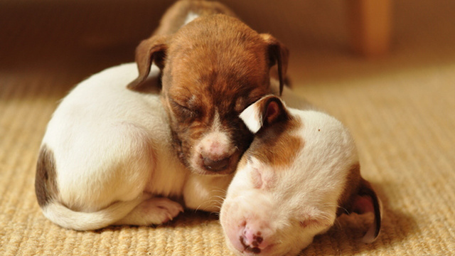 It's Puppy Time in Puppy Town for Pit Bull Appreciation Month