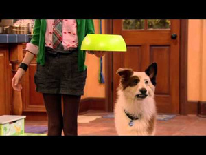 Disney Channel Dog With A Blog See Stan Blog