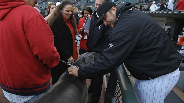 Mark Buehrle's Pit Bull Is Illegal In Toronto