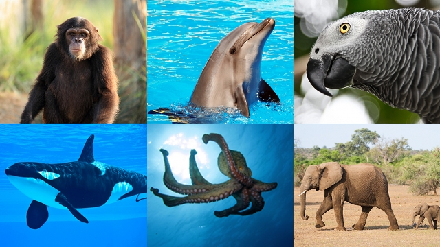 similarities between humans and animals essay Understanding the differences and similarities between animal and human language will benefit society with the human and animal language (final essay.