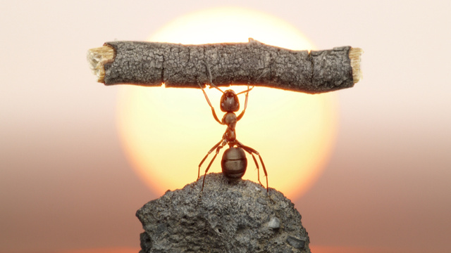 10 Frightening Facts You Probably Didn't Know About Ants