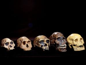 How did humans really evolve?