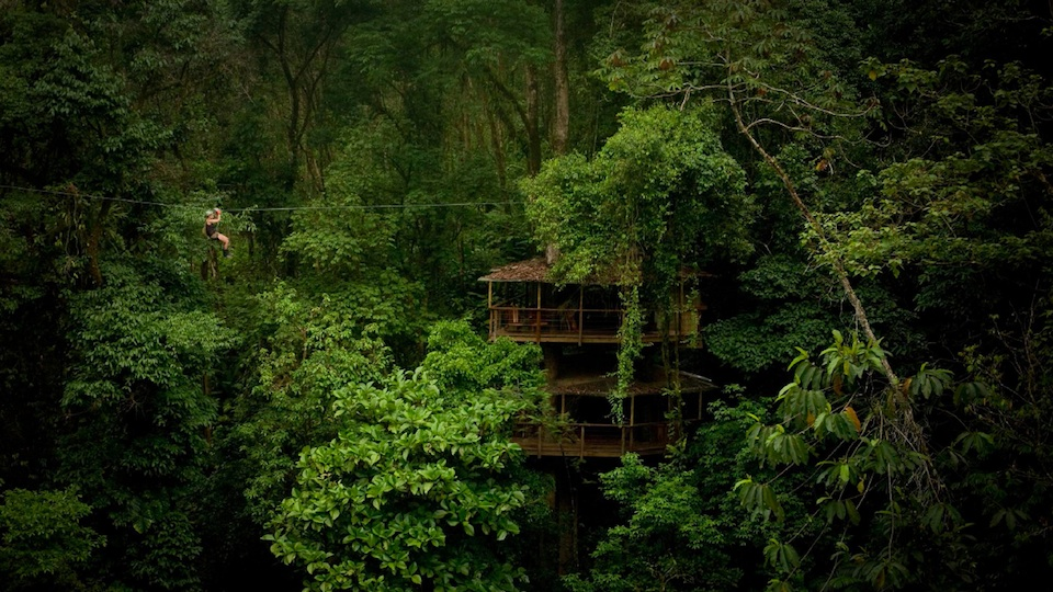 Q A With The Mastermind Of This Amazing Rain Forest Treehouse Gizmodo Australia