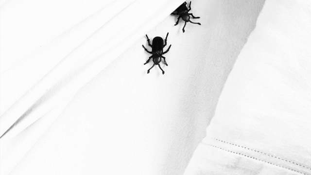 Avoid Bringing Bed Bugs Home with You with the S.L.E.E.P. Acronym