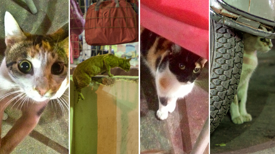 Click here to read Dispatches From Cairo: Egypt's Gangsta Kittens