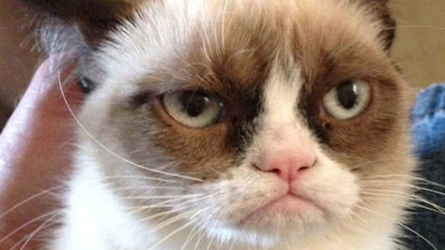 Grumpy Cat Continues Path to World Domination