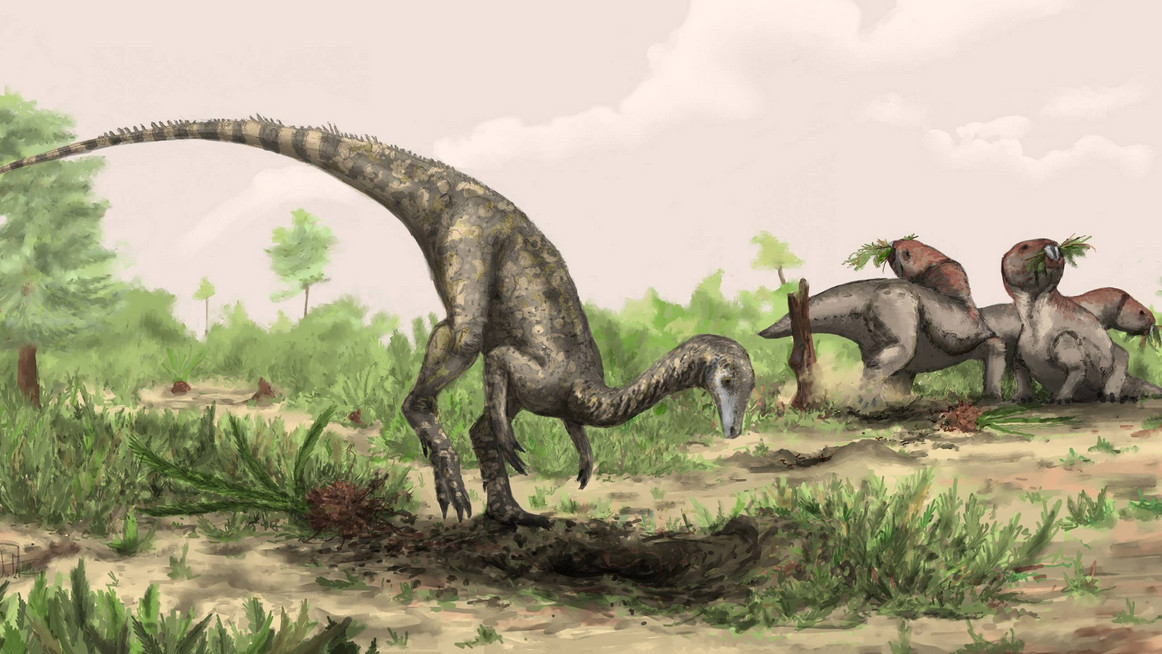 Oldest Dinosaur Ever Found Spent The Last 50 Years In A Closet