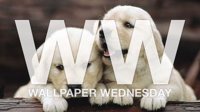 Give Your Desktop a New Best Friend with These Cute Baby Animal Wallpapers