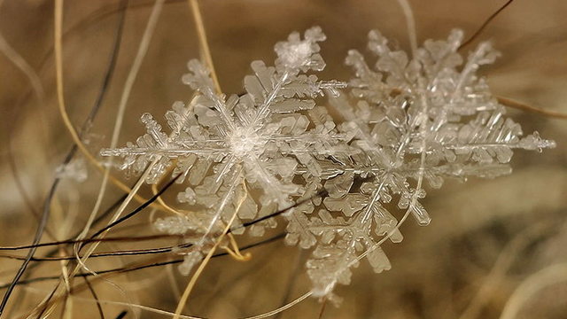 You'll Never Believe These Stunning Photos of Snow are Real