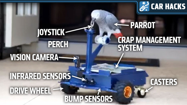 This Man Built A Robotic Car To Quiet His Annoying Parrot