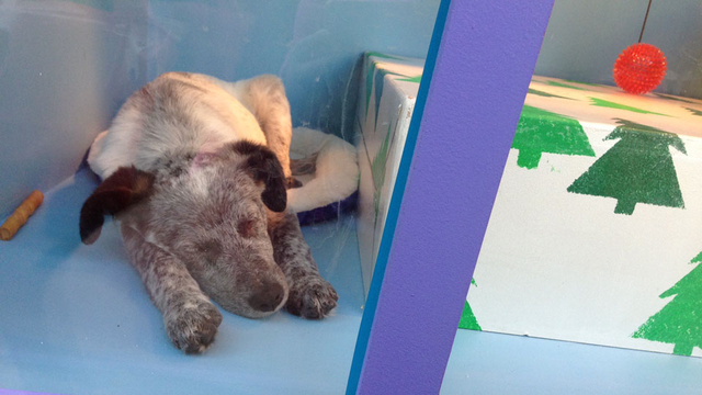 Melt Your Icy Heart: Watch Adoptable Puppies and Kittens Play in a Window