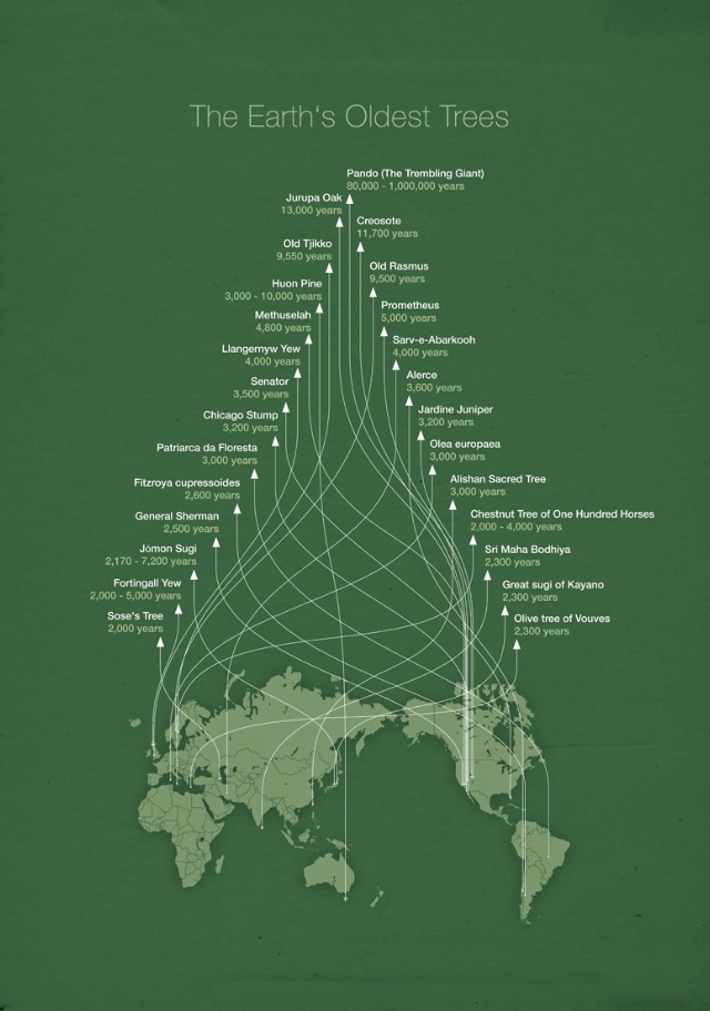 original Infographic plots out worlds oldest trees