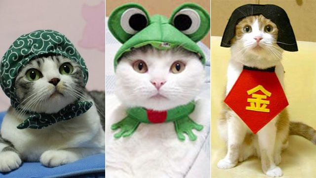 The Wonderful World of Cat Cosplay