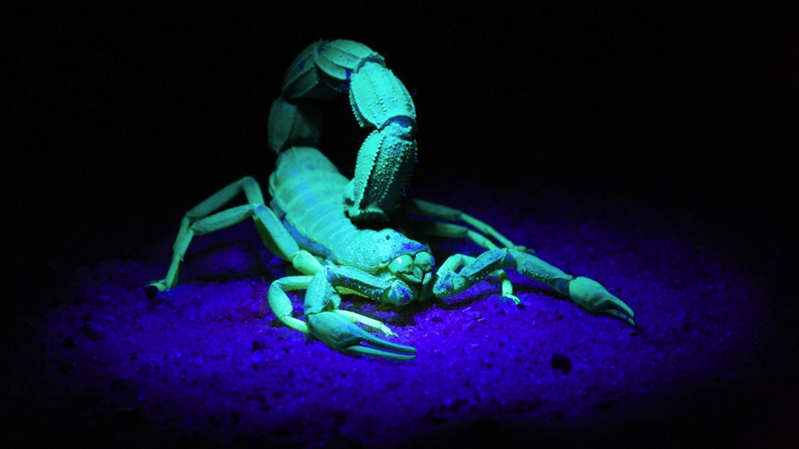 Illuminating Brain Tumours With Scorpion Toxins Could Save Lives