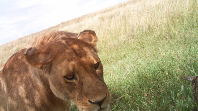 The University Of Oxford Needs Your Help Playing Guess Who With The Serengeti's Wildlife