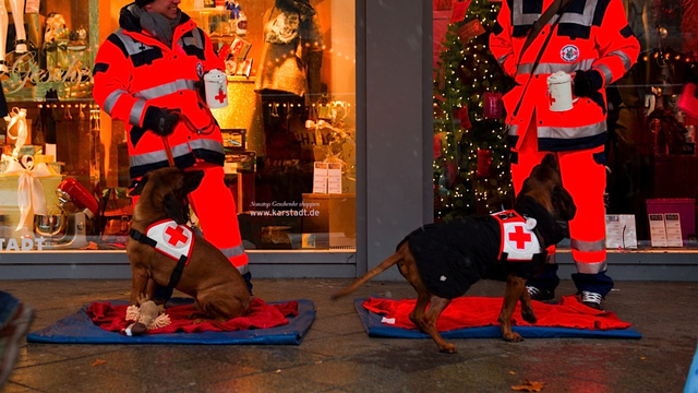 These Helpful Puppies Just Wanted to Check In to See If You Needed Some Extra Holiday Help