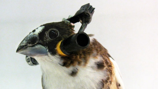 These Skull-Thumping Headphones Are Literally For the Birds