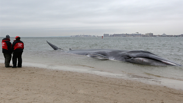 Those We Lost in 2012: the Beached Whale