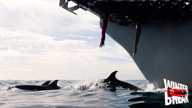 Wild Dolphins Giving Gifts to Humans Is a Real Thing That Happens