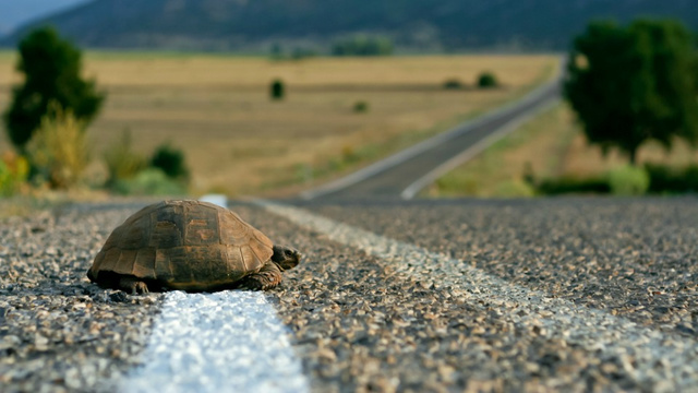 Turtle Roadkill Experiment Conclusively Proves That Humans are Assholes