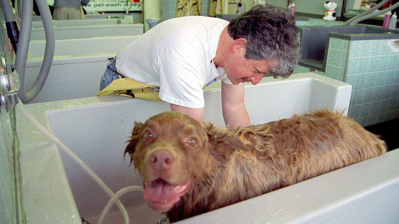 How Much Fabric Softener To Use Minimise Shedding By Adding Fabric Softener To Your Dogs Bath