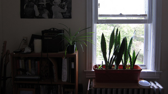 Keep a Snake Plant in Your Bedroom to Improve the Air Quality While You Sleep
