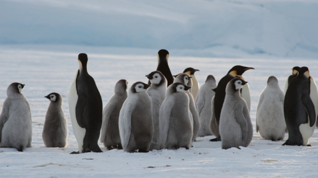 Colony of 9,000 penguins discovered in Antarctica