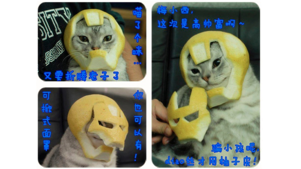 This Iron Man Helmet Was Made Of Grapefruit For A Cat