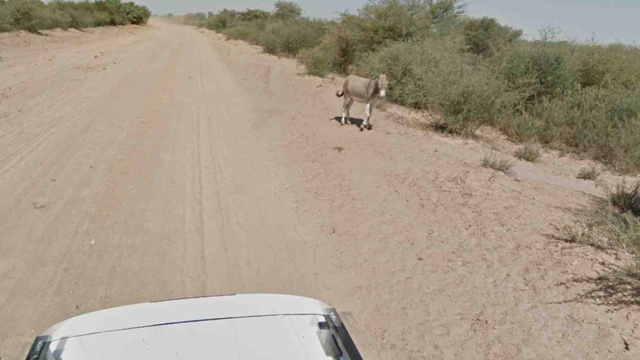 Did Google Kill This Donkey?