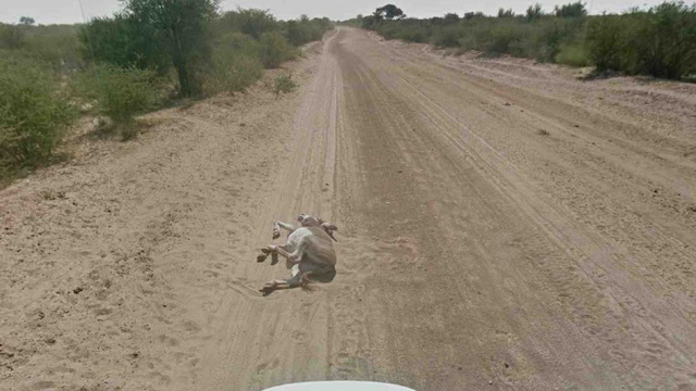 Google Street View Car Not Guilty of Donkey Murder
