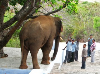 """Elephant taunting"" is now a thing in India"