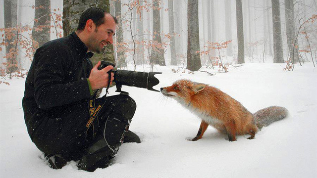 Click here to read These Awesome Photos of a Fox Will Make You Go Aaaaawwwww