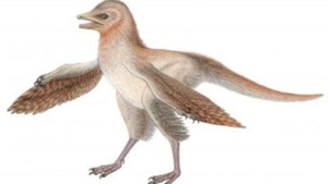 This little dinosaur had feathery wings 150 million years ago--but definitely couldn't fly