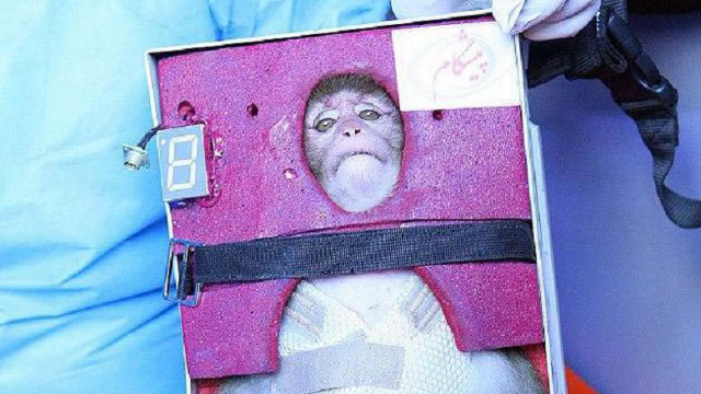 Why do we still send animals into space?