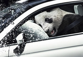 Oh Noes! Cute Panda Crashes Fiat 500
