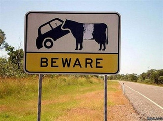 Beware: Sunbeam Imp-Eating Cows Ahead