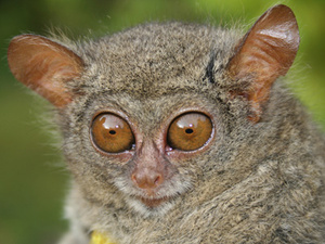12 Real Animals We Can't Believe Aren't Pokémon 22