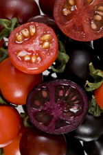 Genetically-Engineered Purple Tomatoes Boost Health