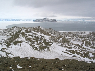 Ancient turtle bones reveal that Antarctica was once a rain forest