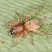 Terrifying spider not extinct in England after all