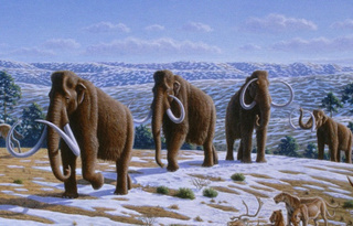 Did mammoths die out because of breastfeeding?
