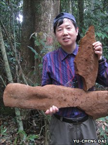 Tropical Chinese fungus weighs half a ton and covers an area of 30 feet