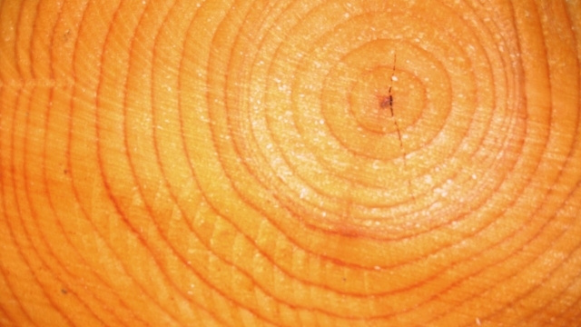 The guy who discovered the truth about tree rings