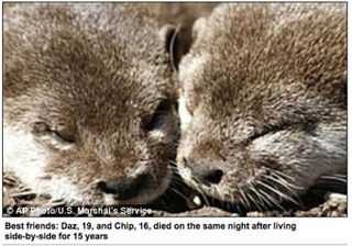 Bromantic Elderly Otter Couple Dies Together • Mississippi To Vote On Abortion Ban In 2011